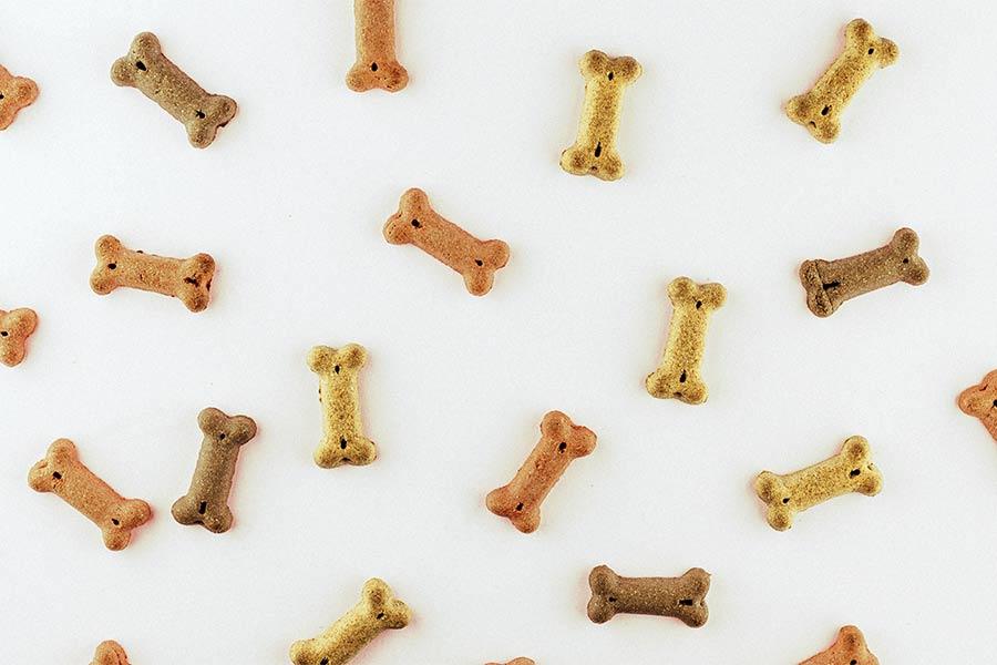 Hunde-neu.de, Hunde, Hundefutter