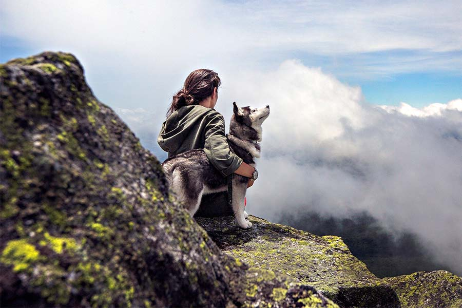 Hunde-neu.de, Hunde, Urlaub mit dem Hund